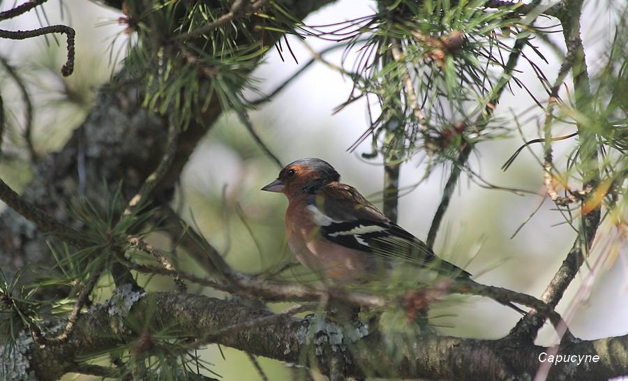 Les oiseaux du jardin en mars