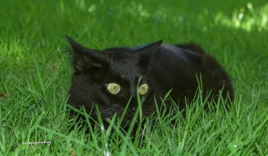 Dans les yeux de Chaka