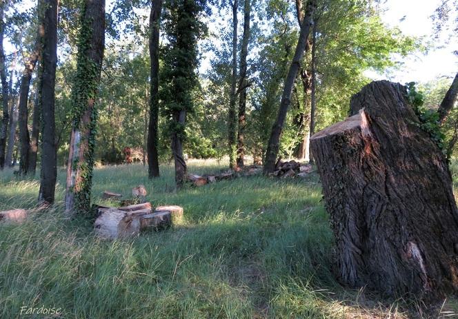 Arbres morts - arbres décapités