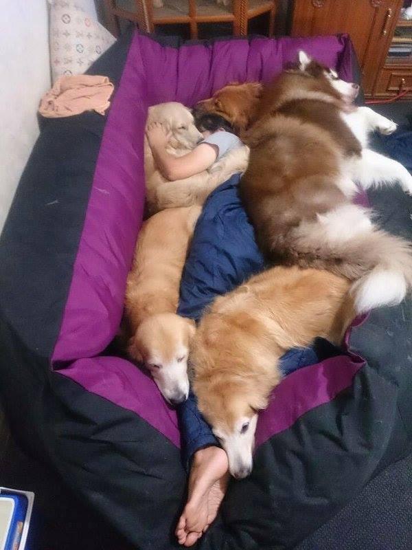 Dormir avec son animal ou ses animaux ? MDR