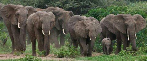 C  P  ELEPHANTS  2