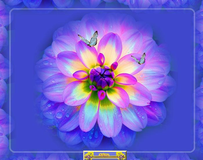 Balade fleurie