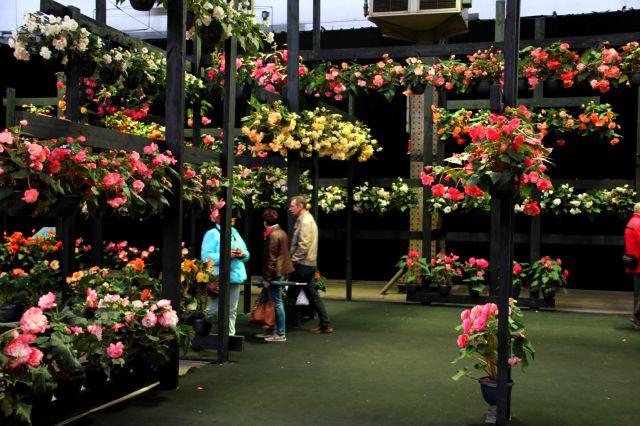 Floralies gantoises 2016 (2/2)