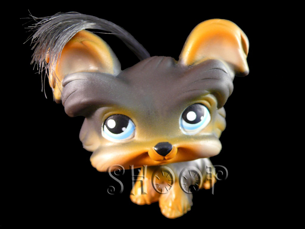 LPS 141