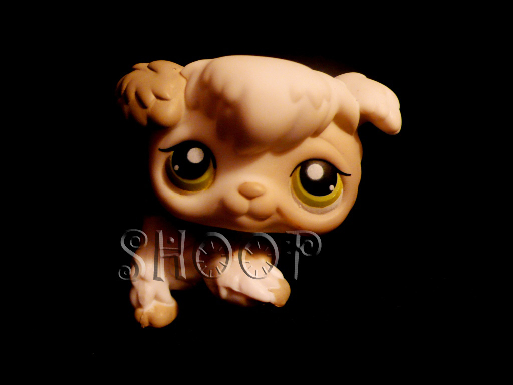 LPS 203