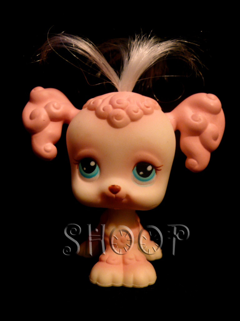 LPS 255