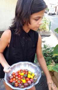 Nos incroyables comestibles ont fructifié