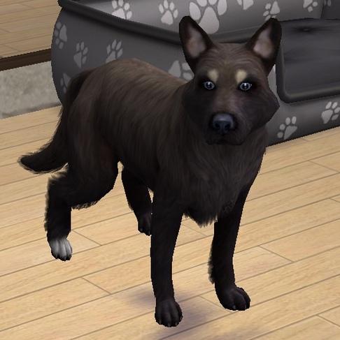 (Larans Dogs): Descendance de Askela
