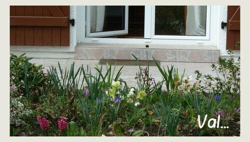 Composition de bulbes dans le jardin - mars 2017