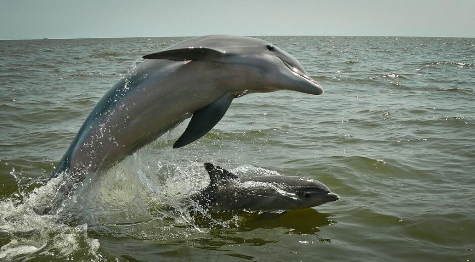 bottlenose-dolphin-940x519