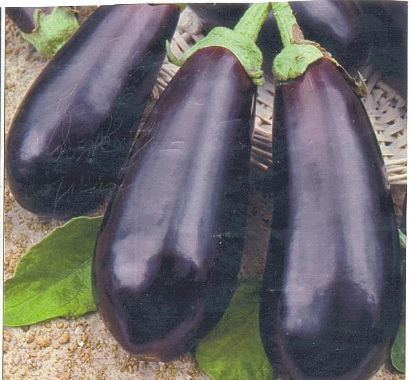 aubergine-jm.jpg.jpg