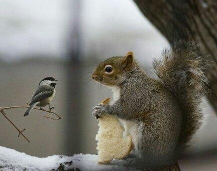 La mésange et l'écureuil...