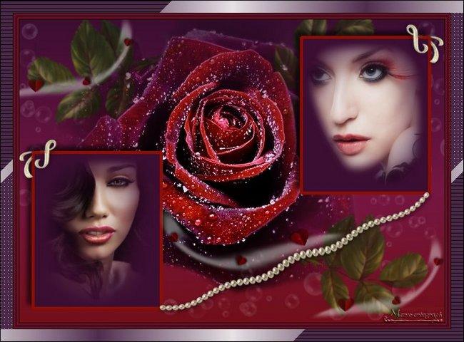 Beauté de la rose et  de la femme