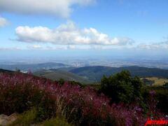 Découvrir en 4 jours l'Alsace et la route des crêtes « 5/2 »