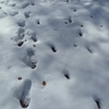 Progression sur la neige