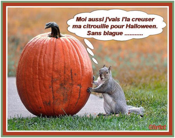 Histoires de Citrouilles !!!!!