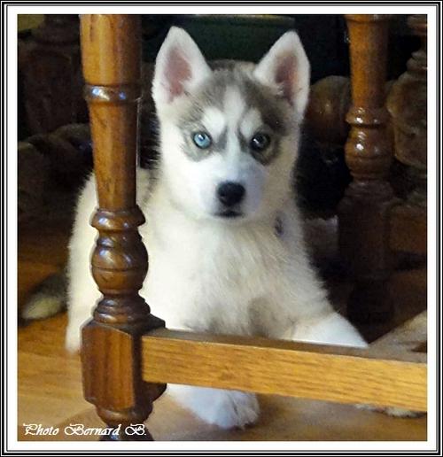 Kiska (2 mois)
