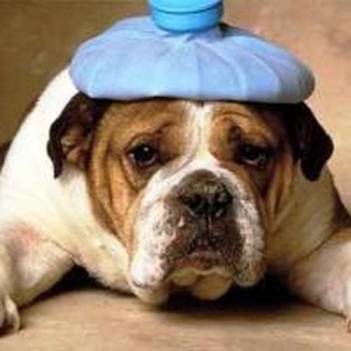 Mon chien vomit, Dois-je m'inquiéter?