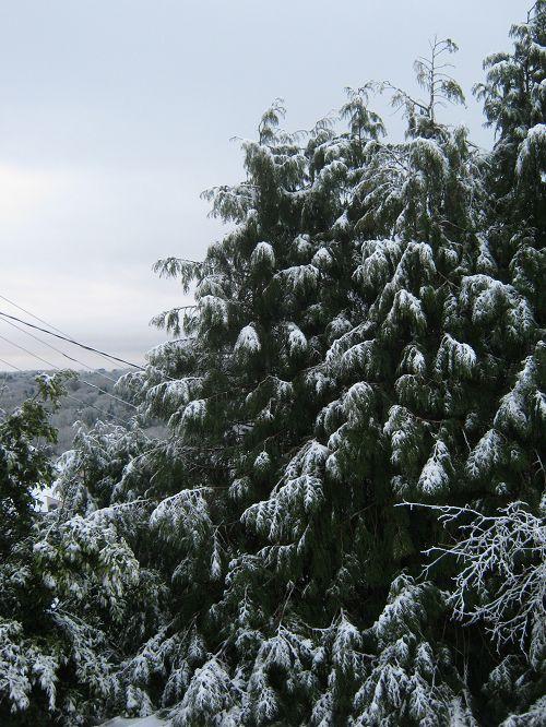 L'année commence blanco.