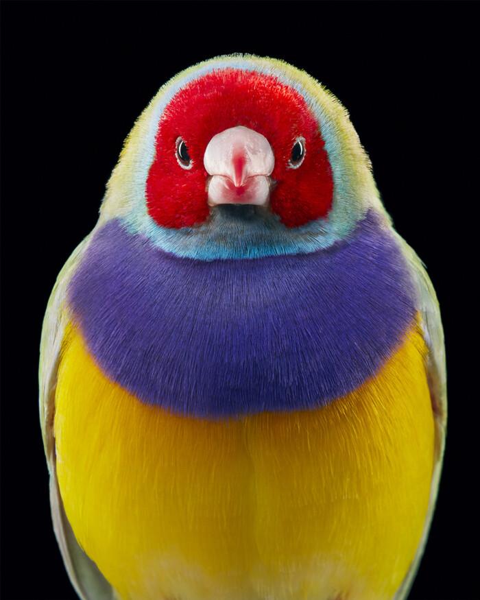 Le photographe Tim Flach met en évidence des oiseaux inhabituels et menacés dans des portraits saisissants