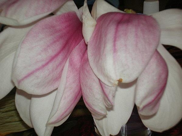 18-mars-2011-021.JPG