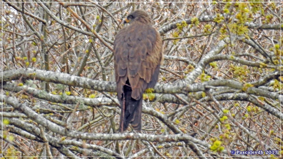 Réserve ornitho du Teich - Mars 2017 - 14/15