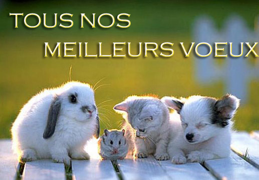 image animaux voeux 2016