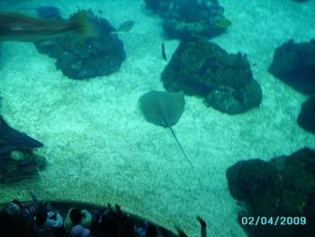 Lisbonne - aquarium  (2)