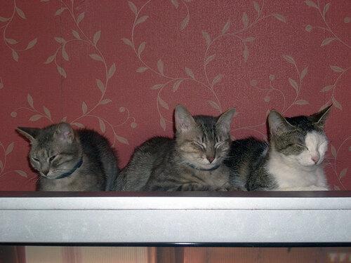 Hermione, Patoche et Ilona