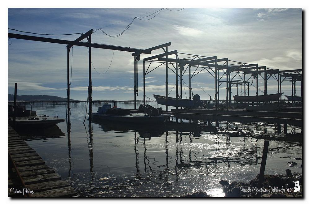Lundi 22 février 2016 - Port Conchylicole