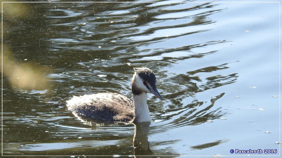 Réserve ornitho du Teich - Octobre 2016 - 7/11