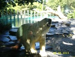 Gabin au zoo
