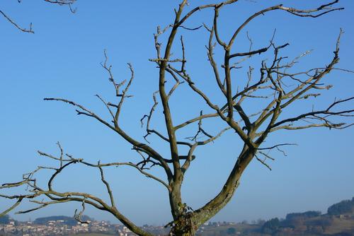 L'arbre nu :