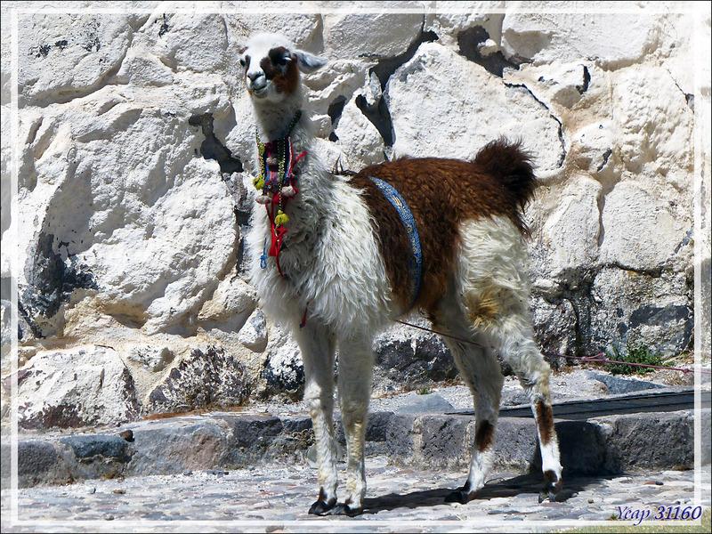 """Escale """"technique"""" pour notre guide à Achoma (Maca) - Canyon de Colca - Pérou"""