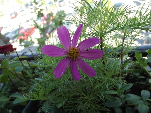 Ces quelques fleurs pour votre journée