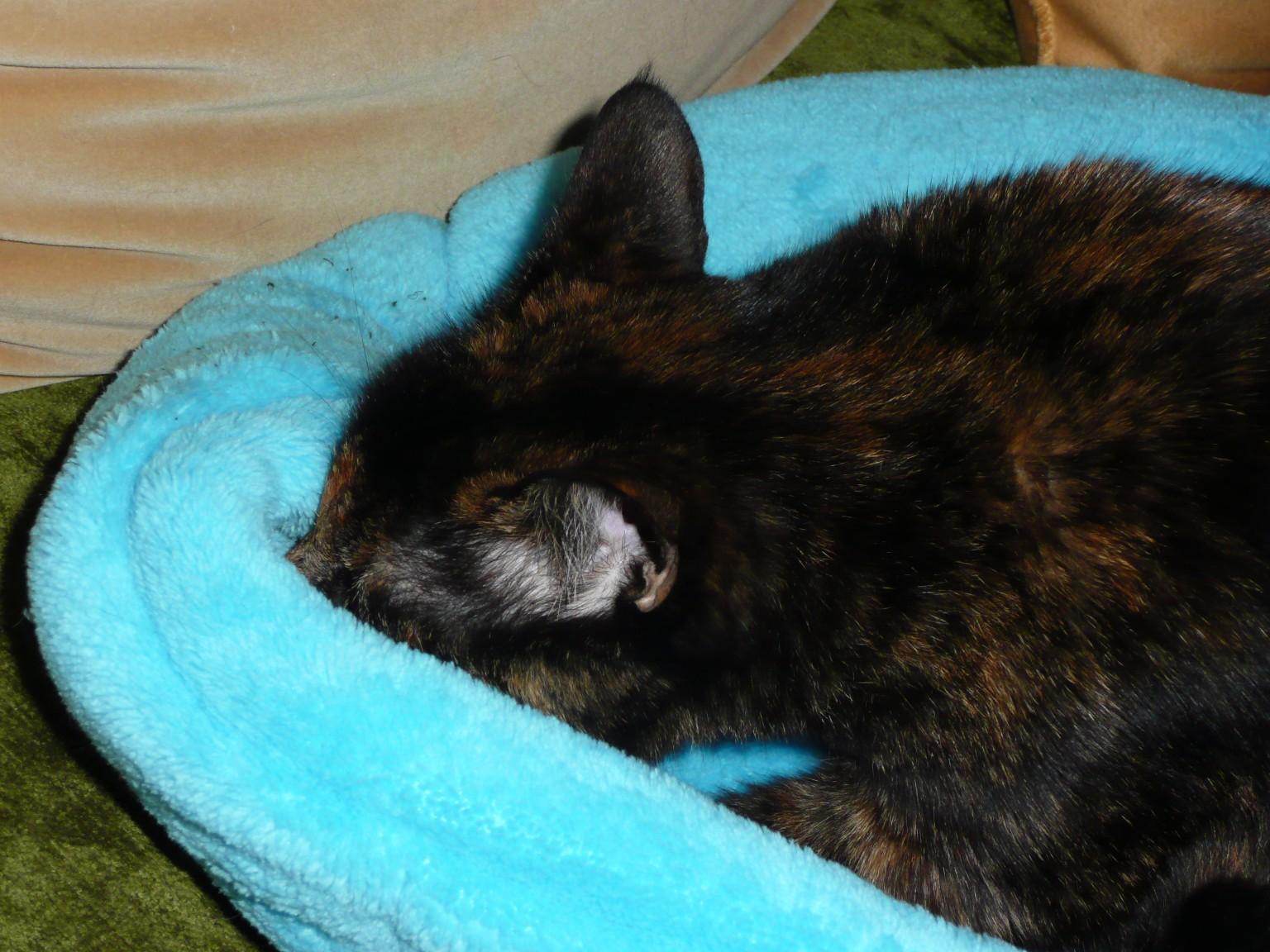 Coussin pour chat en polaire douce