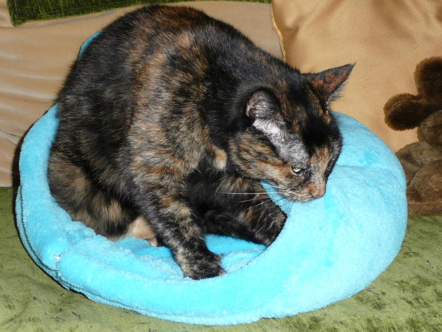 Corbeille à chat en polaire doudouillette
