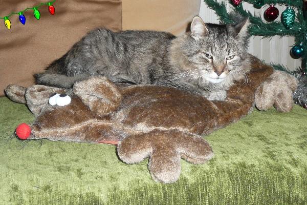 Père Noël en retard et cadeaux des chats