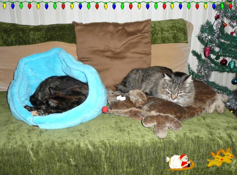 Père Noël en retard et cadeaux pour les chats