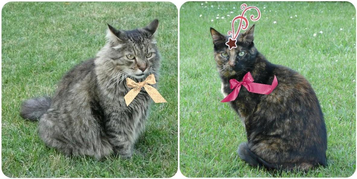 Les chats en tenue de fête pour le réveillon