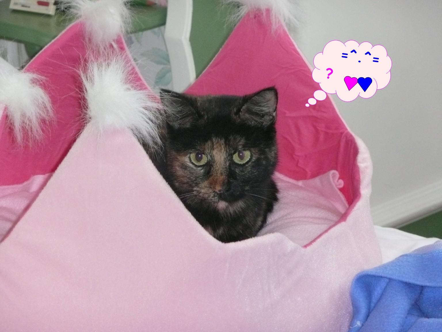 Saint valentin et chats 2014