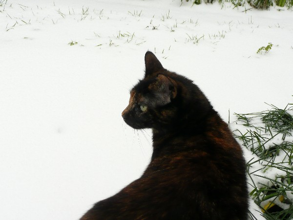 Chat et neige