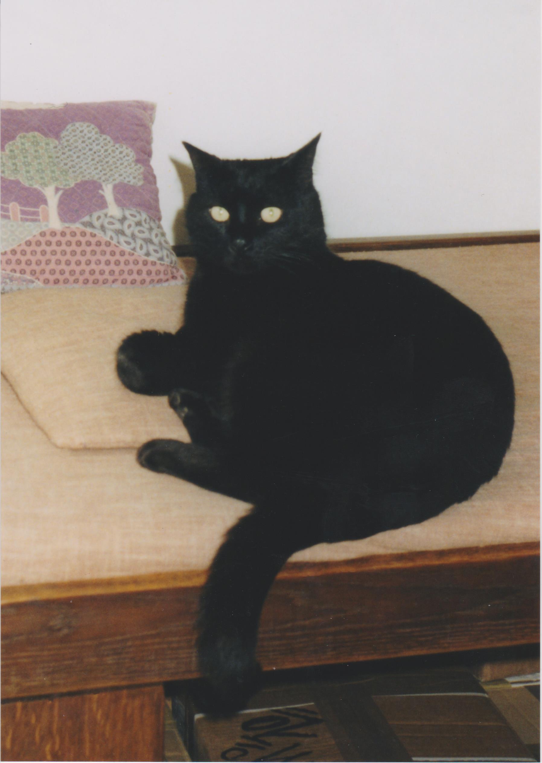 cat lettre du paradis des chats le blog d 39 eowin et de. Black Bedroom Furniture Sets. Home Design Ideas