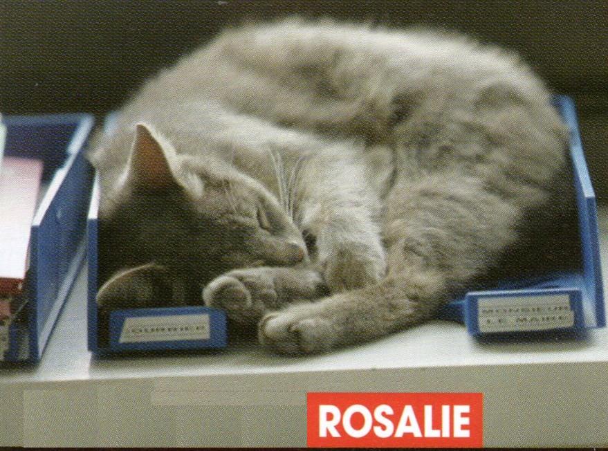 Rosalie une chatte à la mairie