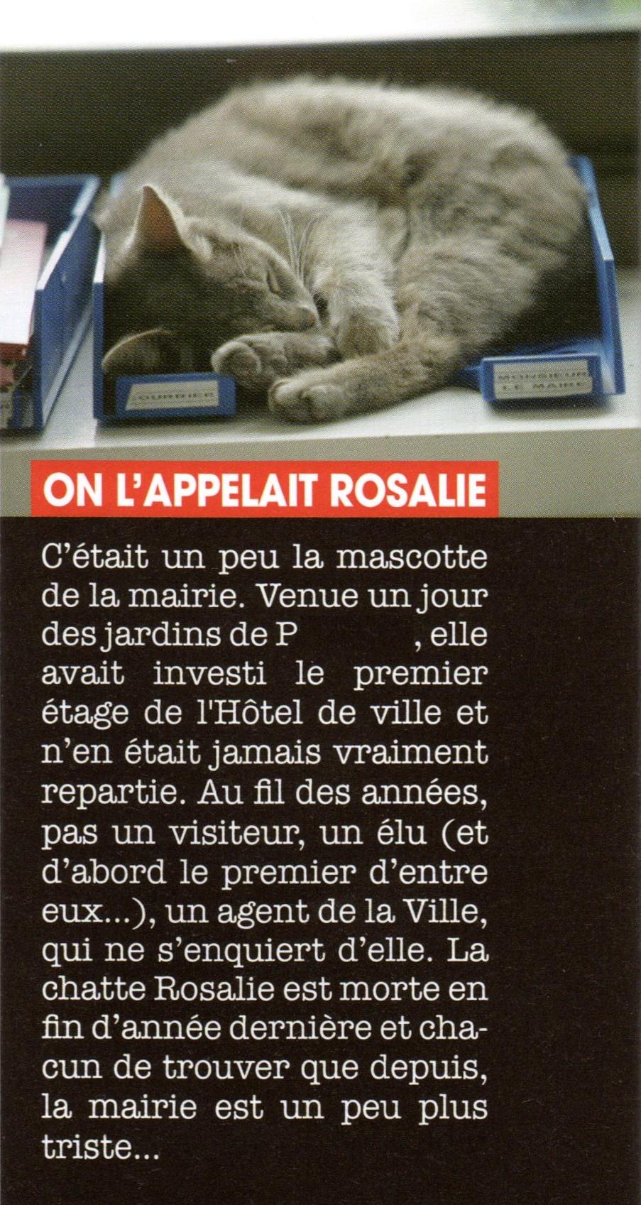 Rosalie chatte de mairie