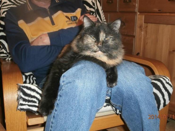 Lilith  chatte adoptée de l'hôpital de Perpignan