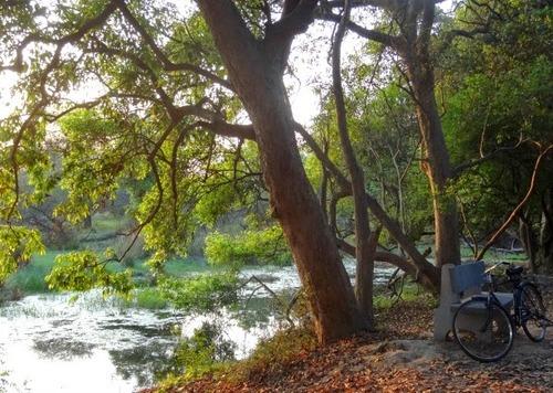 Patrimoine mondial de l'Unesco : Le parc national de Keoladeo -Inde-