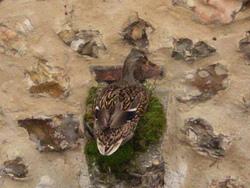 Coucou du haïku : Oiseau