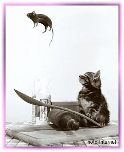 souris acrobate
