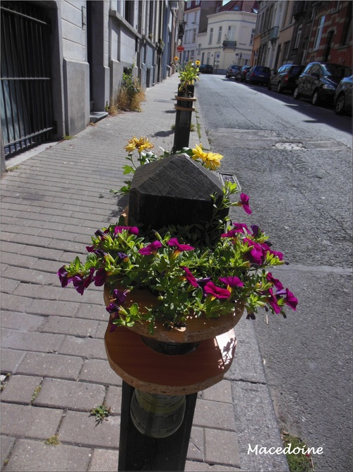 Une rue fleurie...
